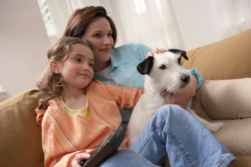 How Animal Hair Affects Your Sanford, FL Home's AC Filter